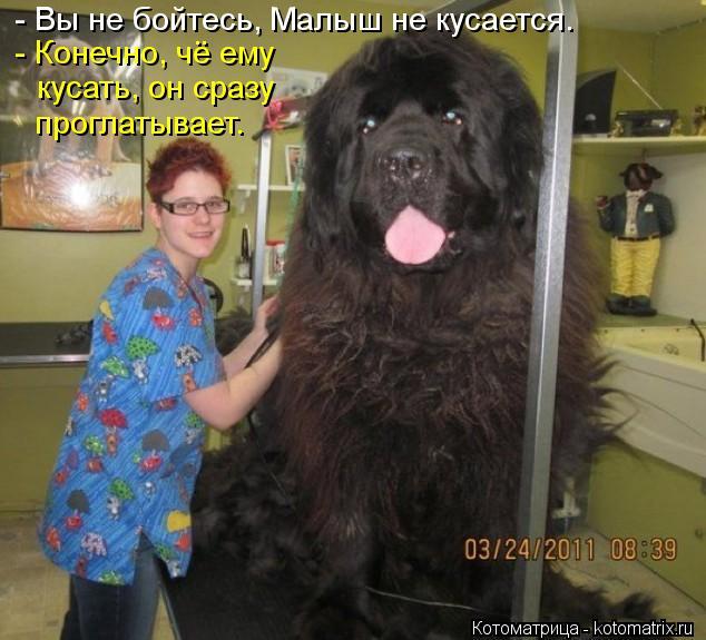 kotomatritsa_Uh.jpg
