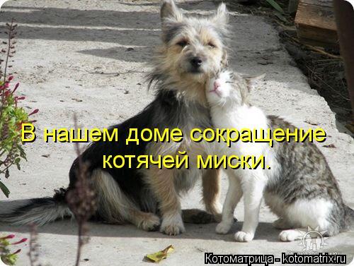 Котоматрица: В нашем доме сокращение котячей миски.