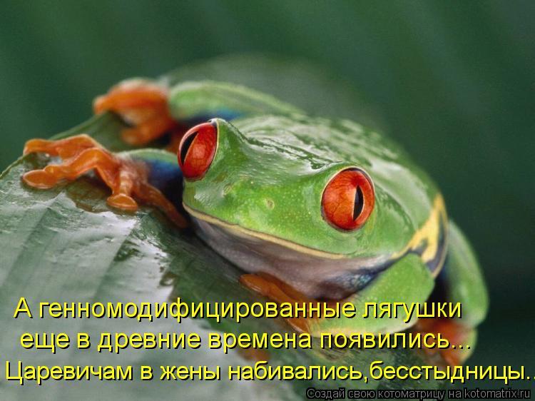 Котоматрица: А генномодифицированные лягушки  еще в древние времена появились... Царевичам в жены набивались,бесстыдницы...