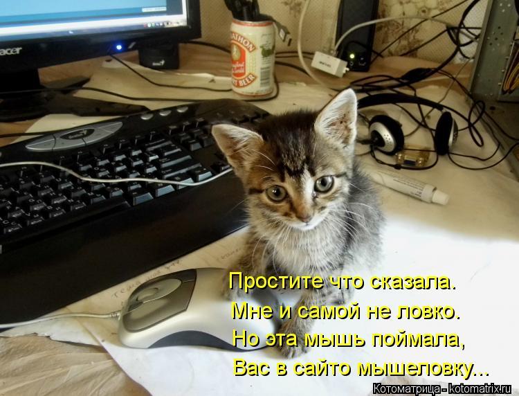 Котоматрица: Простите что сказала. Мне и самой не ловко. Но эта мышь поймала, Вас в сайто мышеловку...
