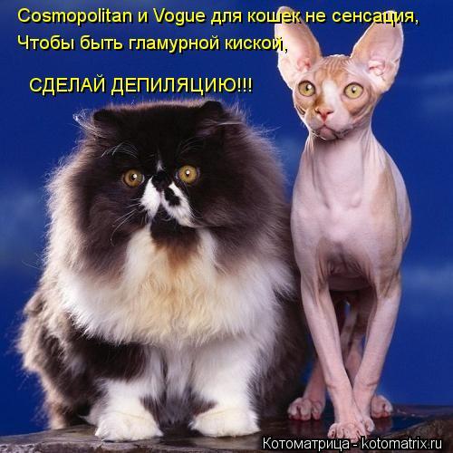 Котоматрица: Cosmopolitan и Vogue для кошек не сенсация, Чтобы быть гламурной киской, СДЕЛАЙ ДЕПИЛЯЦИЮ!!!