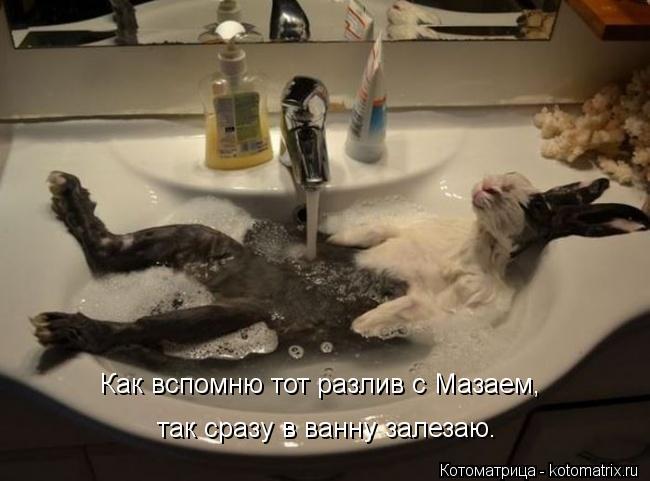 Котоматрица: Как вспомню тот разлив с Мазаем,  так сразу в ванну залезаю.