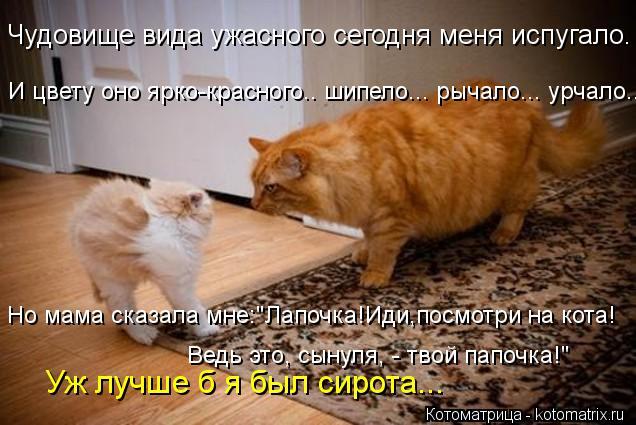 kotomatritsa_gXY.jpg