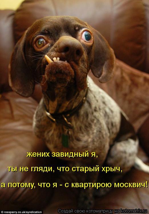 Котоматрица: а потому, что я - с квартирою москвич! ты не гляди, что старый хрыч, жених завидный я,