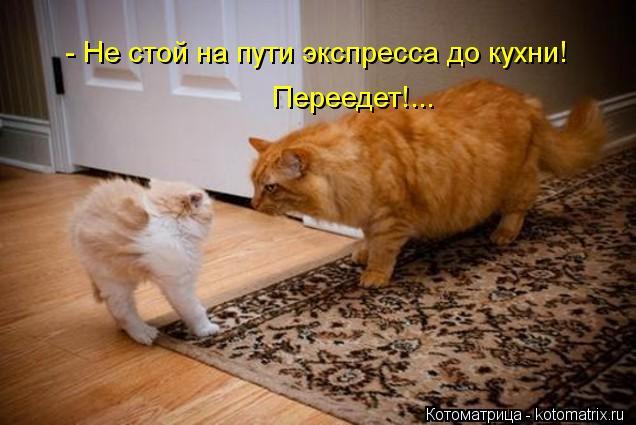 Котоматрица: - Не стой на пути экспресса до кухни! Переедет!...