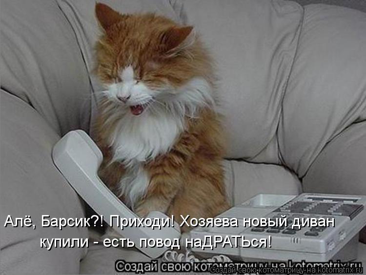 Котоматрица: Алё, Барсик?! Приходи! Хозяева новый диван  купили - есть повод наДРАТЬся!