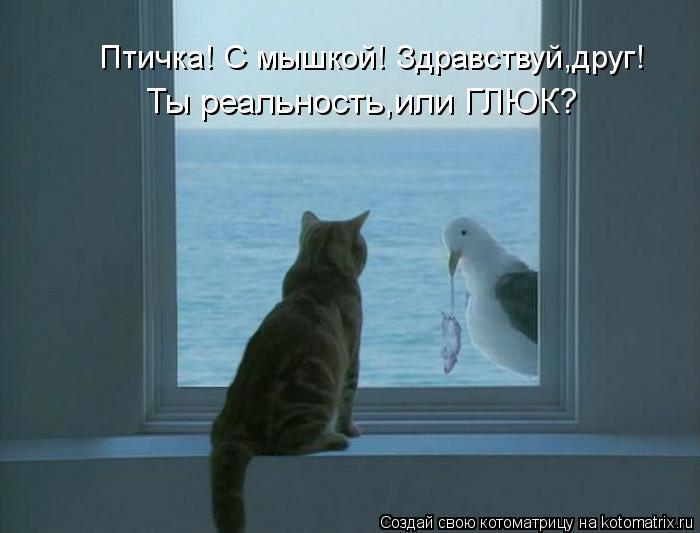Котоматрица: Птичка! С мышкой! Здравствуй,друг! Ты реальность,или ГЛЮК?