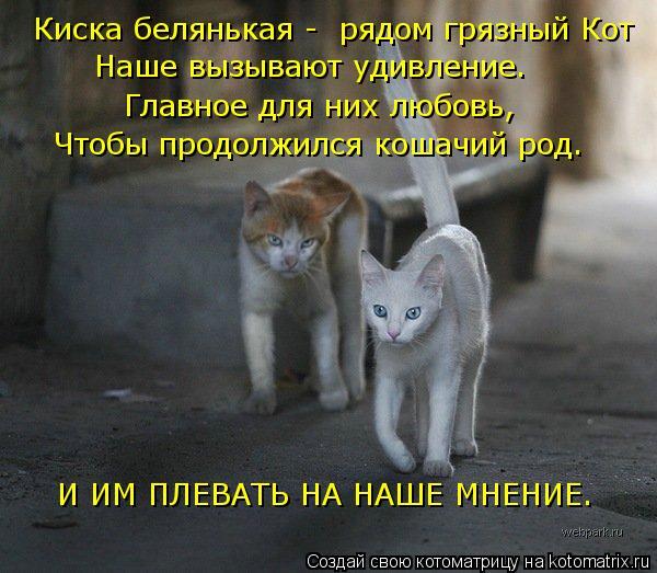 Котоматрица: Киска белянькая -  рядом грязный Кот Наше вызывают удивление. Главное для них любовь,  Чтобы продолжился кошачий род. И ИМ ПЛЕВАТЬ НА НАШЕ МН
