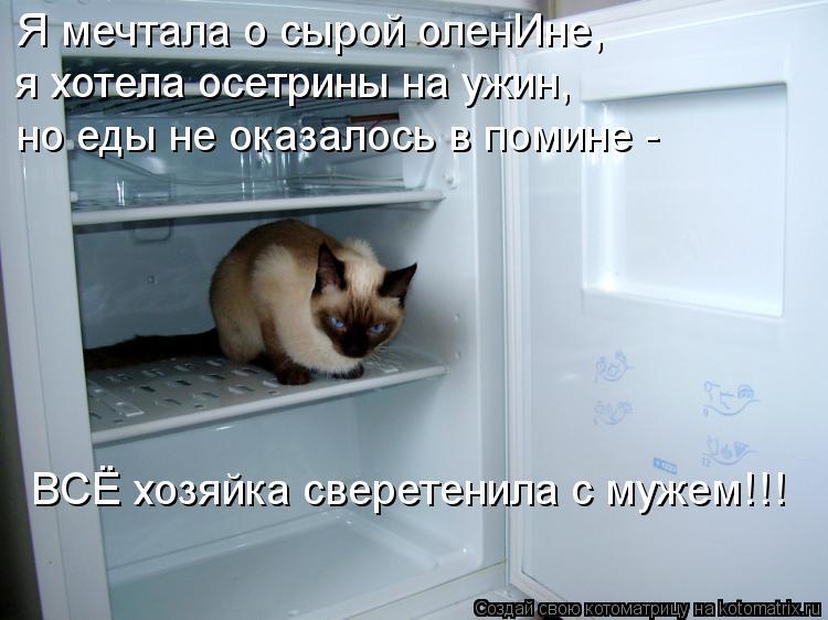 Котоматрица: Я мечтала о сырой оленИне, я хотела осетрины на ужин, но еды не оказалось в помине - ВСЁ хозяйка сверетенила с мужем!!!