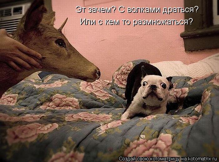 Котоматрица: Эт зачем? С волками драться? Или с кем то размножаться?