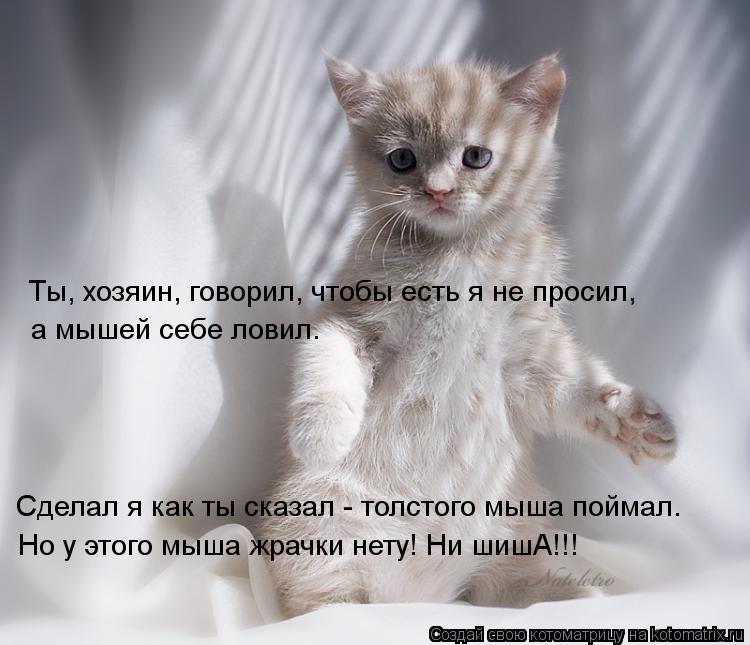 kotomatritsa_j-.jpg