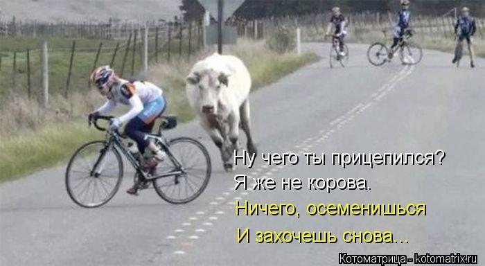 Котоматрица: Ну чего ты прицепился? Я же не корова. Ничего, осеменишься И захочешь снова...