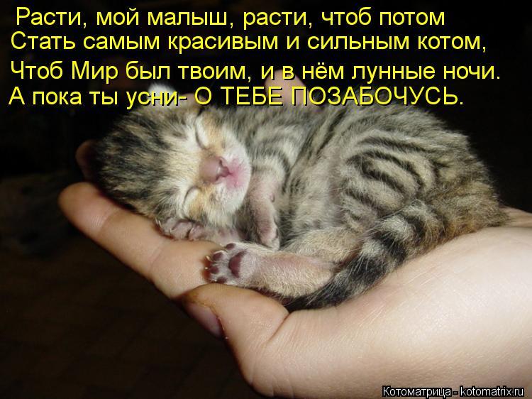 Котоматрица: Расти, мой малыш, расти, чтоб потом Стать самым красивым и сильным котом, Чтоб Мир был твоим, и в нём лунные ночи. А пока ты усни- О ТЕБЕ ПОЗАБО