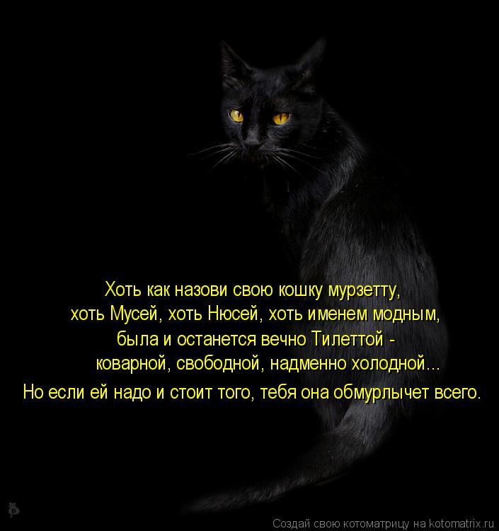 Котоматрица: Хоть как назови свою кошку мурзетту, хоть Мусей, хоть Нюсей, хоть именем модным, была и останется вечно Тилеттой - коварной, свободной, надме