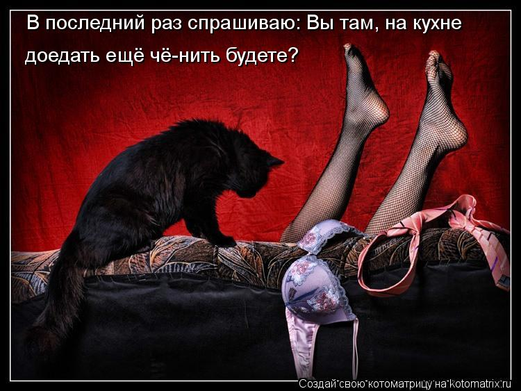 kotomatritsa_1u.jpg