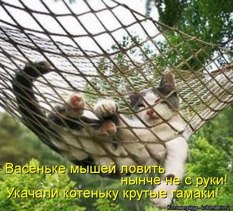 Котоматрица: Васеньке мышей ловить нынче не с руки! Укачали котеньку крутые гамаки!