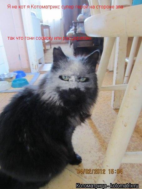 Котоматрица: Я не кот я Котоматрикс супер герой на стороне зла так что гони сосиску или расцарапаю