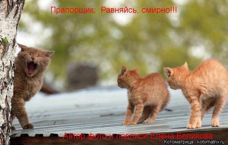 Котоматрица: Прапорщик;  Равняйсь, смирно!!! Автор фото и подписи Елена Беликова