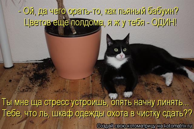 kotomatritsa_fn.jpg