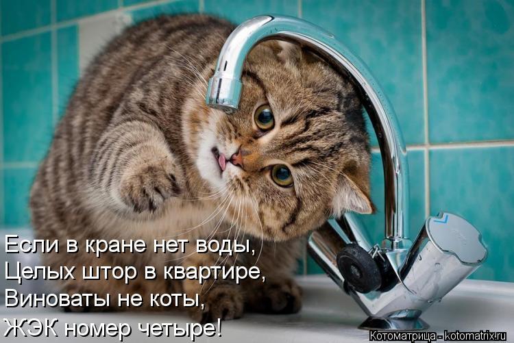Котоматрица: Если в кране нет воды, Целых штор в квартире, Виноваты не коты, ЖЭК номер четыре!
