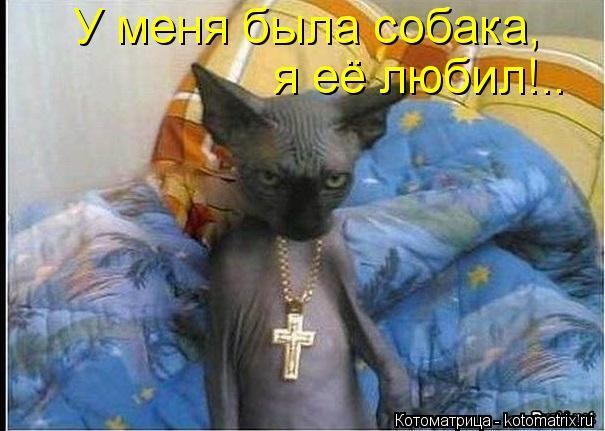 Котоматрица: У меня была собака, я её любил!..
