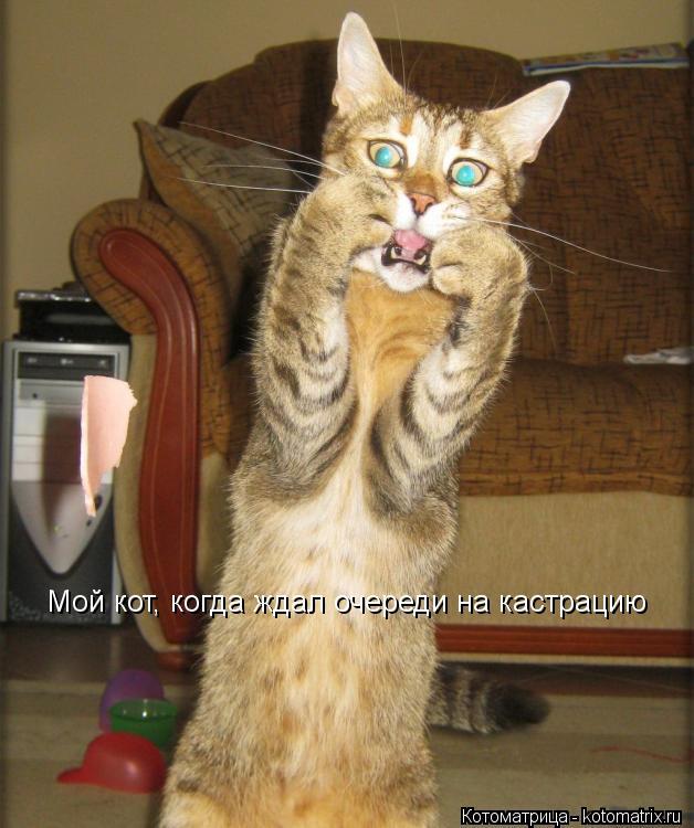 Котоматрица: Мой кот, когда ждал очереди на кастрацию