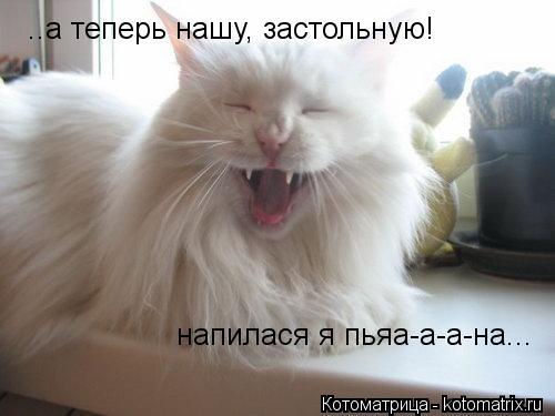 kotomatritsa_29.jpg