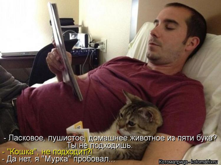 """Котоматрица: - Ласковое, пушистое, домашнее животное из пяти букв? Ты не подходишь. - """"Кошка"""", не подходит?! - Да нет, я """"Мурка"""" пробовал..."""