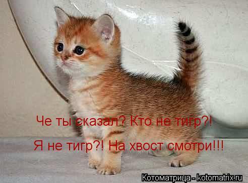 kotomatritsa_FtL.jpg
