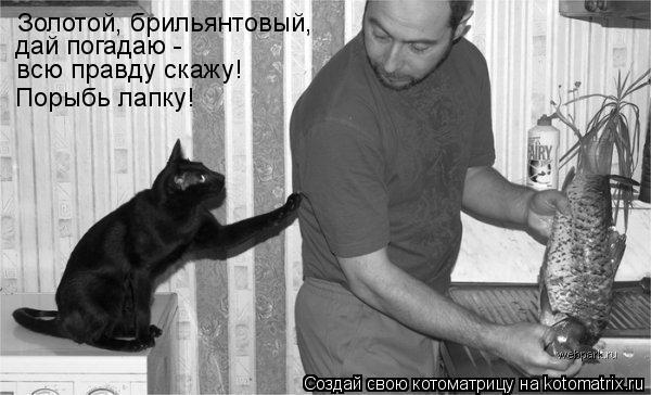 kotomatritsa_Rb.jpg