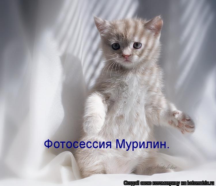 Котоматрица: Фотосессия Мурилин.