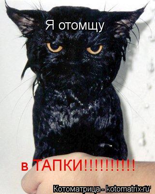 Котоматрица: Я отомщу в ТАПКИ!!!!!!!!!!