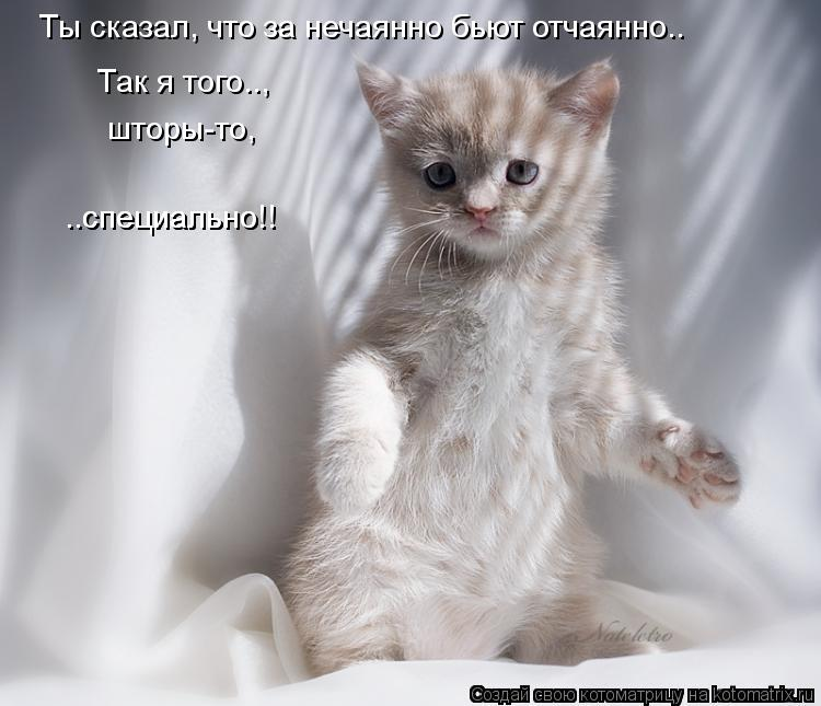 kotomatritsa_38.jpg