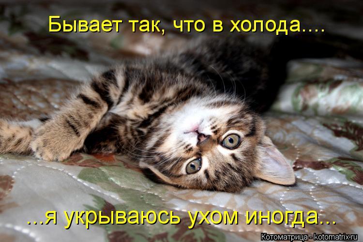 Котоматрица: Бывает так, что в холода.... ...я укрываюсь ухом иногда...