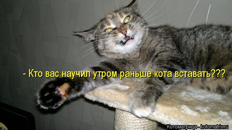 kotomatritsa_GS.jpg