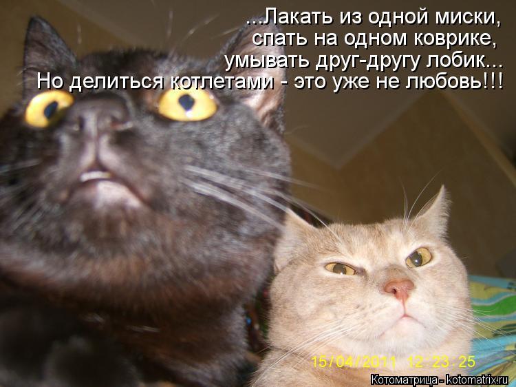 Котоматрица: ...Лакать из одной миски, спать на одном коврике, умывать друг-другу лобик... Но делиться котлетами - это уже не любовь!!!