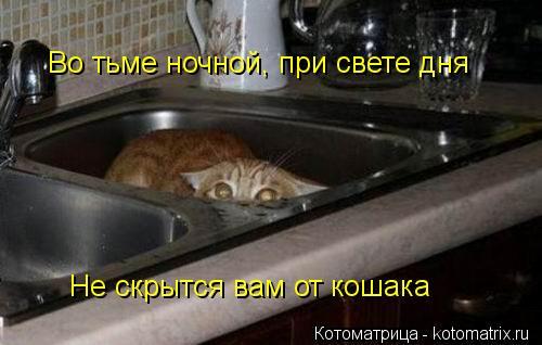Котоматрица: Во тьме ночной, при свете дня Не скрытся вам от кошака