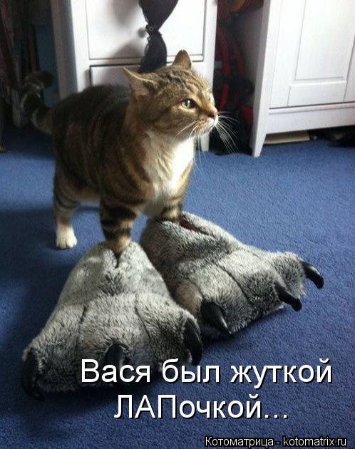Котоматрица: Вася был жуткой ЛАПочкой...