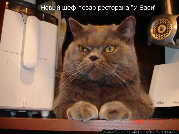 "Котоматрица: Новый шеф-повар ресторана ""У Васи"""