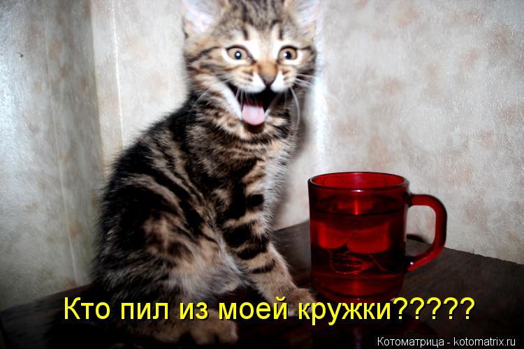 Котоматрица: Кто пил из моей кружки?????