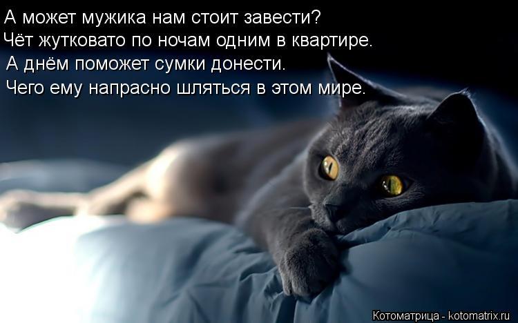 Котоматрица: А может мужика нам стоит завести? Чёт жутковато по ночам одним в квартире. А днём поможет сумки донести. А днём поможет сумки донести. Чего е