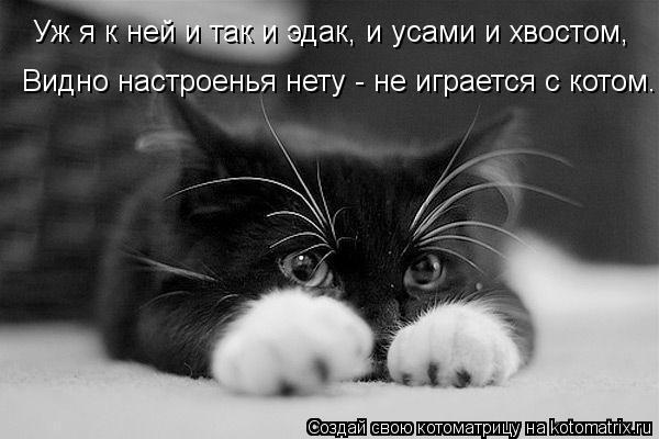 Котоматрица: Уж я к ней и так и эдак, и усами и хвостом, Видно настроенья нету - не играется с котом.