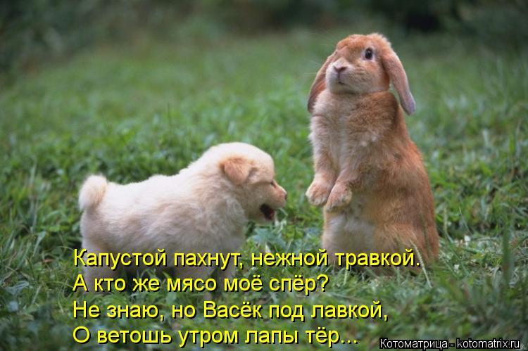 Котоматрица: Капустой пахнут, нежной травкой. А кто же мясо моё спёр? Не знаю, но Васёк под лавкой, О ветошь утром лапы тёр...