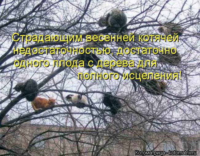 Котоматрица: Страдающим весенней котячей недостаточностью, достаточно одного плода с дерева для  полного исцеления!