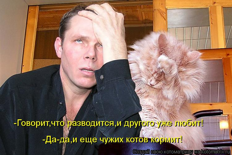 Котоматрица: -Говорит,что разводится,и другого уже любит! -Да-да,и еще чужих котов кормит!