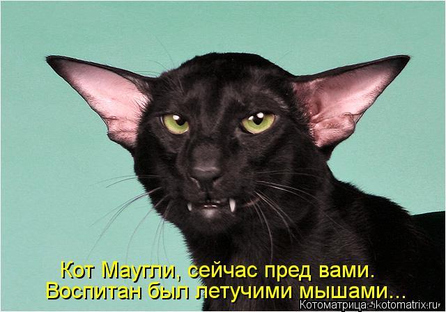 Котоматрица: Воспитан был летучими мышами... Кот Маугли, сейчас пред вами.