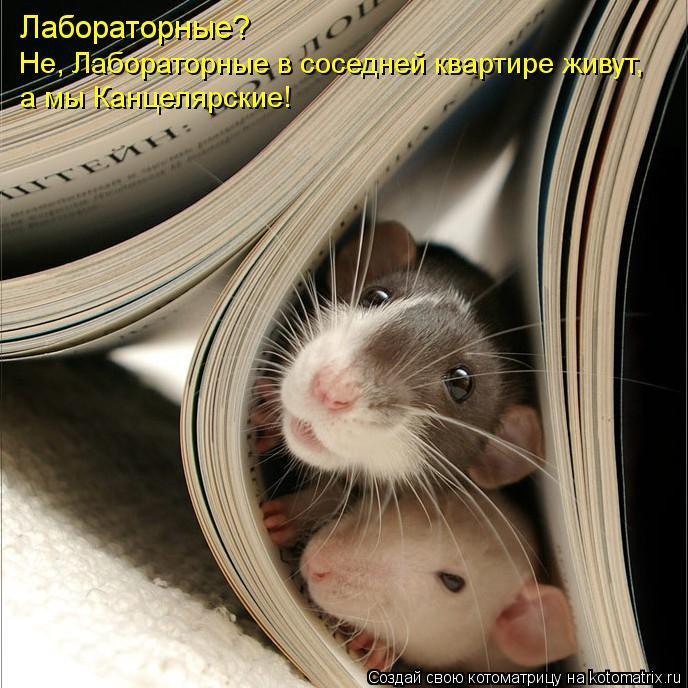 Котоматрица: Лабораторные?  Не, Лабораторные в соседней квартире живут, а мы Канцелярские!