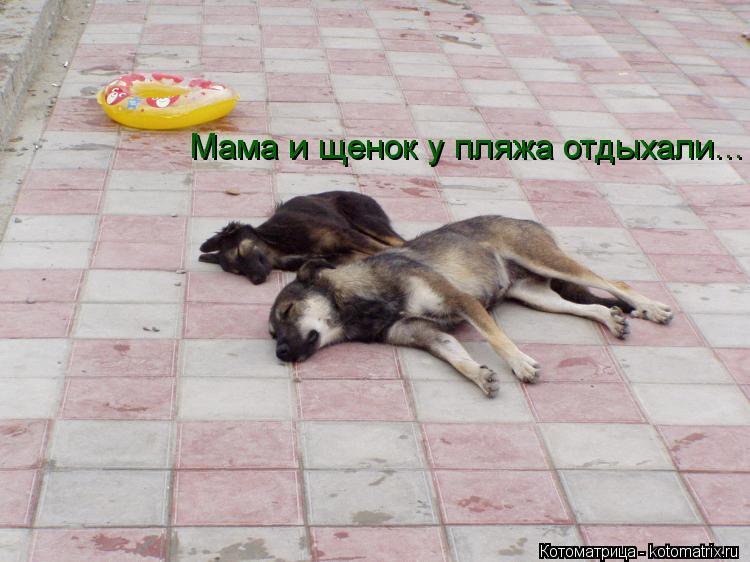 Котоматрица: Мама и щенок у пляжа отдыхали...