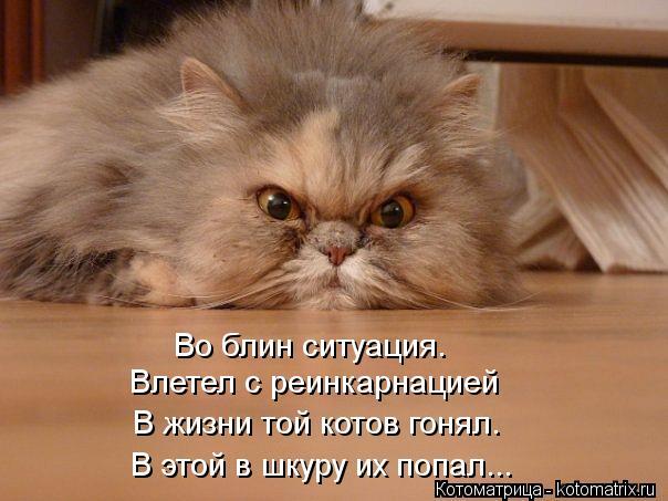 Котоматрица: Во блин ситуация. Влетел с реинкарнацией  В жизни той котов гонял. В этой в шкуру их попал...
