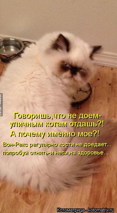 Котоматрица: Говоришь,что не доем- уличным котам отдашь?! А почему именно мое?! Вон-Рекс регулярно кости не доедает... попробуй отнять-и неси,на здоровье...